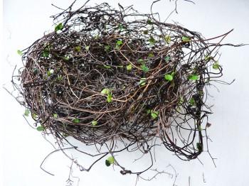 Ostergras - dünne Zweige