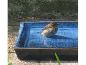 Vogelbad - Vogeltränke aus Keramik