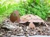Schildkröte 3D mit Rostpatina