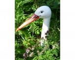 Gartenstecker - Storch