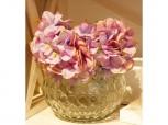 Hortensie - Blüte
